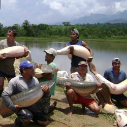 Paiche en Iquitos